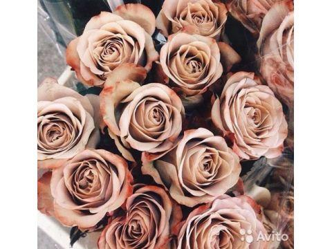 19 роз цвета капучино