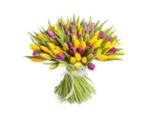 101 тюльпан желтый + фиолетовый
