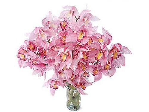 21 орхидея
