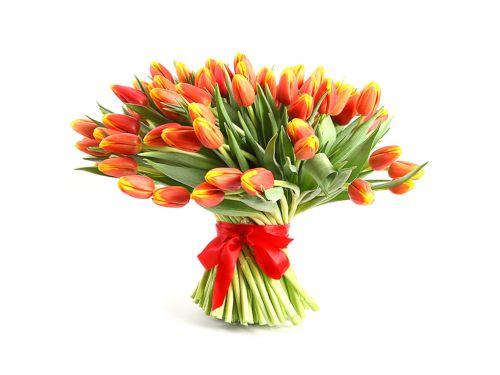 49 оранжевых тюльпанов