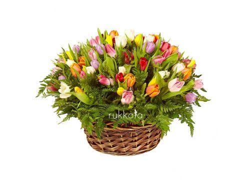 Корзина из 49 разноцветных тюльпанов