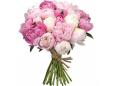 29 бело-розовых пионов