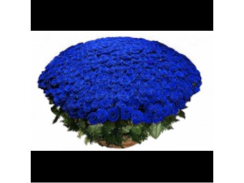 Корзина из 301 синей розы