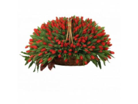 301 красный тюльпан