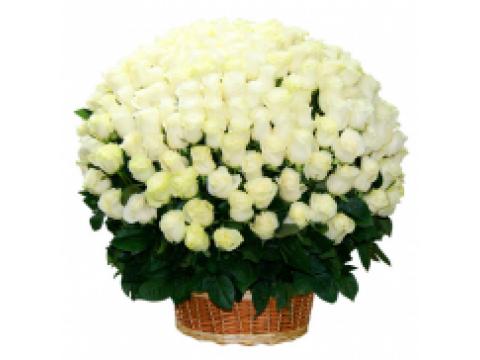 Корзина из 151 белой розы